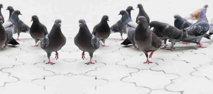 arpon-aves